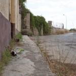 street-art-79
