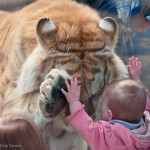 tiger and baby 1